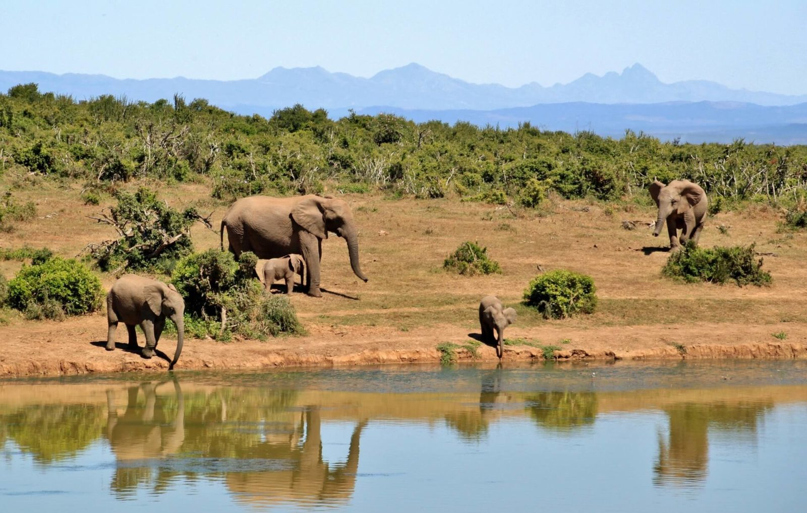 south africa travel elephant