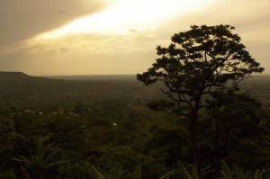 Forest, Uganda, East and Southern Africa