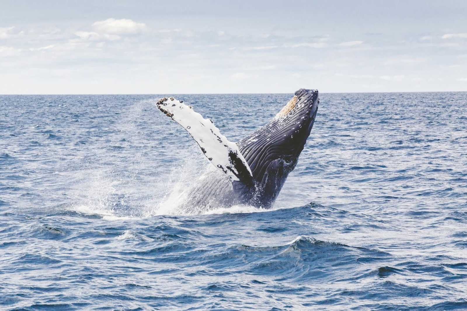 south africa travel humpback